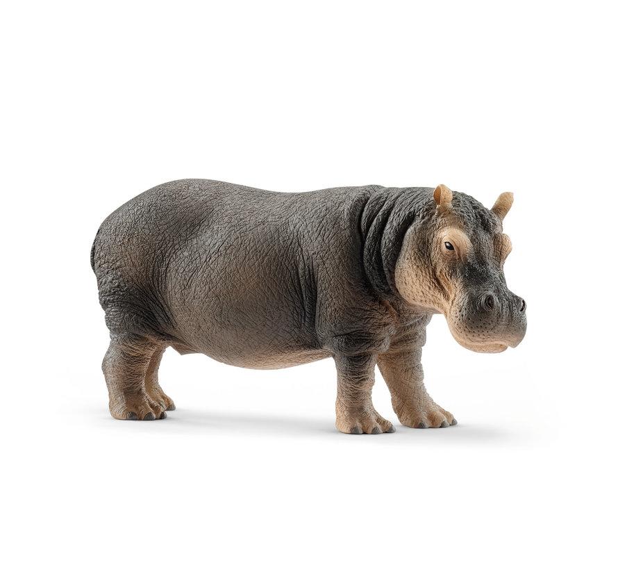 Hippopotamus 14814