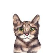 Fritsy Postkaart Kat