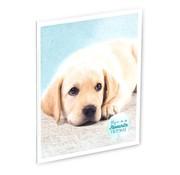 My Favourite friends Schrift A5 hond lijn