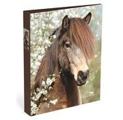 Amazone Ringband 4r paard bruin