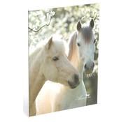 Amazone A4 ruitjes schrift - 2 paarden