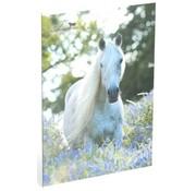 Amazone A4 lijntjes schrift - 1 paard