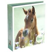 My Favourite friends Ordner 2 rings - paard
