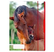 Elastomap A4 - paard