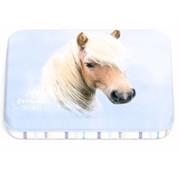 My Favourite friends Bewaarblikje - paard