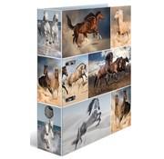 . Ordner - paarden
