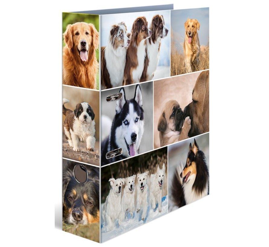 Ordner - honden