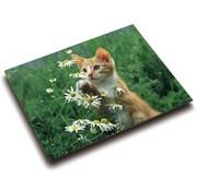 Bureaulegger - kat bloemen