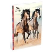 Amazone A4 lijntjes schrift - paarden strand