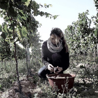 New natural Wines from Ina Wihler - Baden.