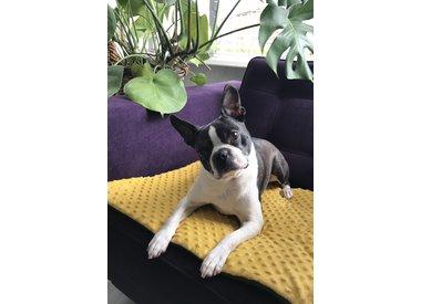 Sofa Blankets