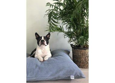Honden kussen