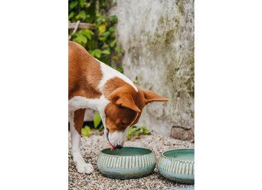 Water and food bowls