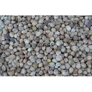 ECS 1kg Hemp seed Coarse