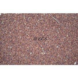 ECS 1kg Evening Primrose Seed