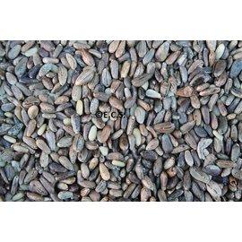 thistle seed Cardoon 1 kilo