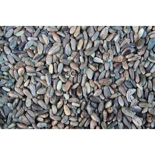 Distelzaad Kardoen 1 kilo (niet leverbaar)