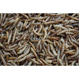ECS Dried mealworms