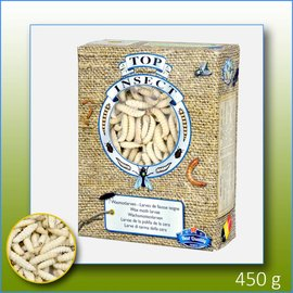 Top Insect Wax Moth Larvae
