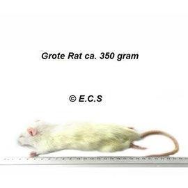 XL Grote Rat circa 350gram Diepvries