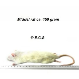 Middel Rat 100-150gram Diepvries