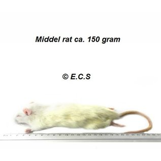 Middel Rat 100-150gram Diepvries