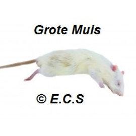 Muizen 20-35 gram Diepvries