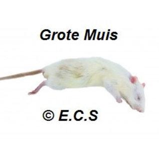 Muizen 25-40 gram Diepvries