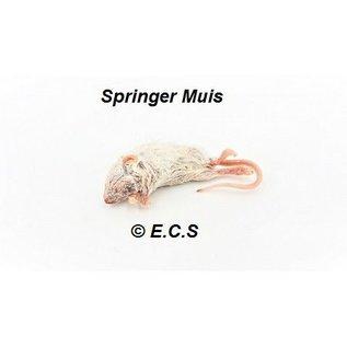 springer muis 7-15 gram