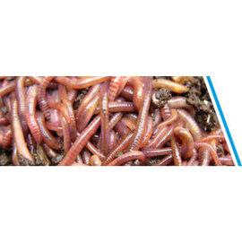 Mestpiertjes bakje 40-50 stuks