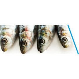 Sardines groot per 3 (diepvries)