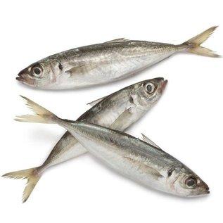 Hors Makreel groot Per 3 stuks (Diepvries)