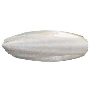 Sepia schelpen middel