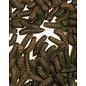 Blacksoldierfly Hermetia gedroogd 250gram