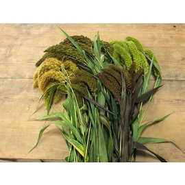 5 types of fresh millet grown organically