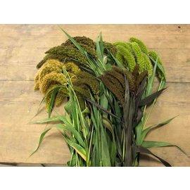 mix 5 soorten vers trosgierst biologisch verbouwd +/-1kg