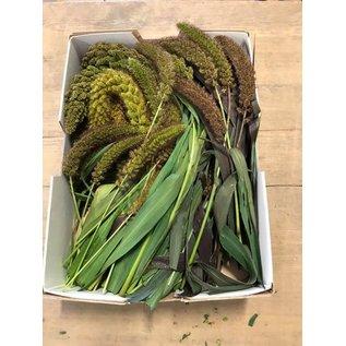 Mischen Sie 5 Arten von frischer Hirse, biologisch angebaut +/- 1 kg