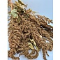 Next Level Birdfood Copy of Amarant Tros Groen Biologisch geteeld (NL)