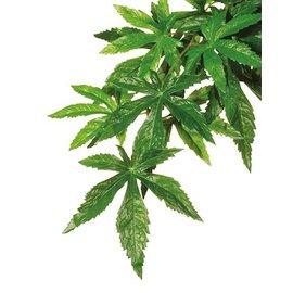 Kunstplant abutilon L
