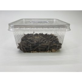 Copy of Blacksoldierfly Hermetia Levend Groot 100gram