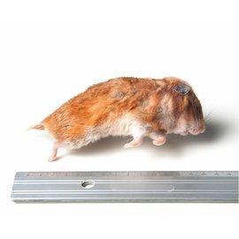 Voeder Syrische hamster mix 50-170 g 1kg