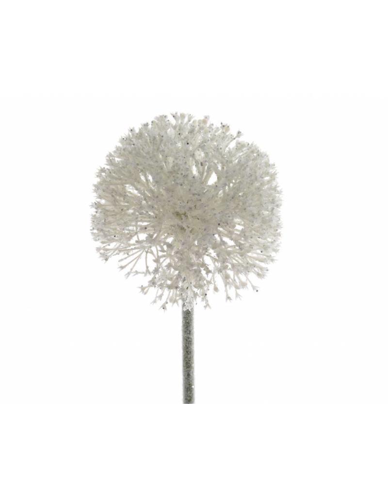 Allium Wit 51cm