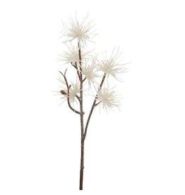 Pure Podocarpus