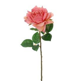Pure Single Rose Pink