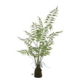PTMD PTMD Fern Plant Green Aspargus