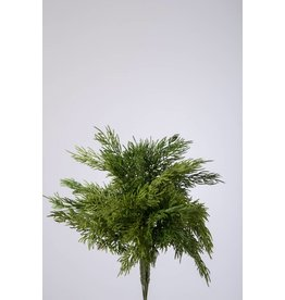 Colours and Green Pine bundle 31 cm
