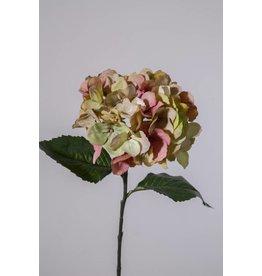 Colours and Green Hydrangea single stem 61 cm