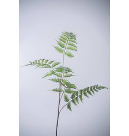 Colours and Green Leather Fern 106 cm
