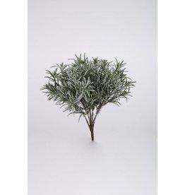 Colours and Green Podocarpus Bush 29 cm