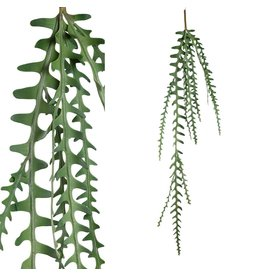 PTMD PTMD Fern Green Hanging